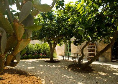 Fig trees outside communal kitchen