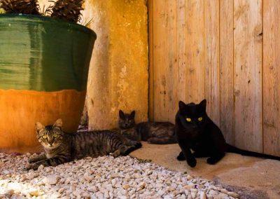 I gatti della masseria celano